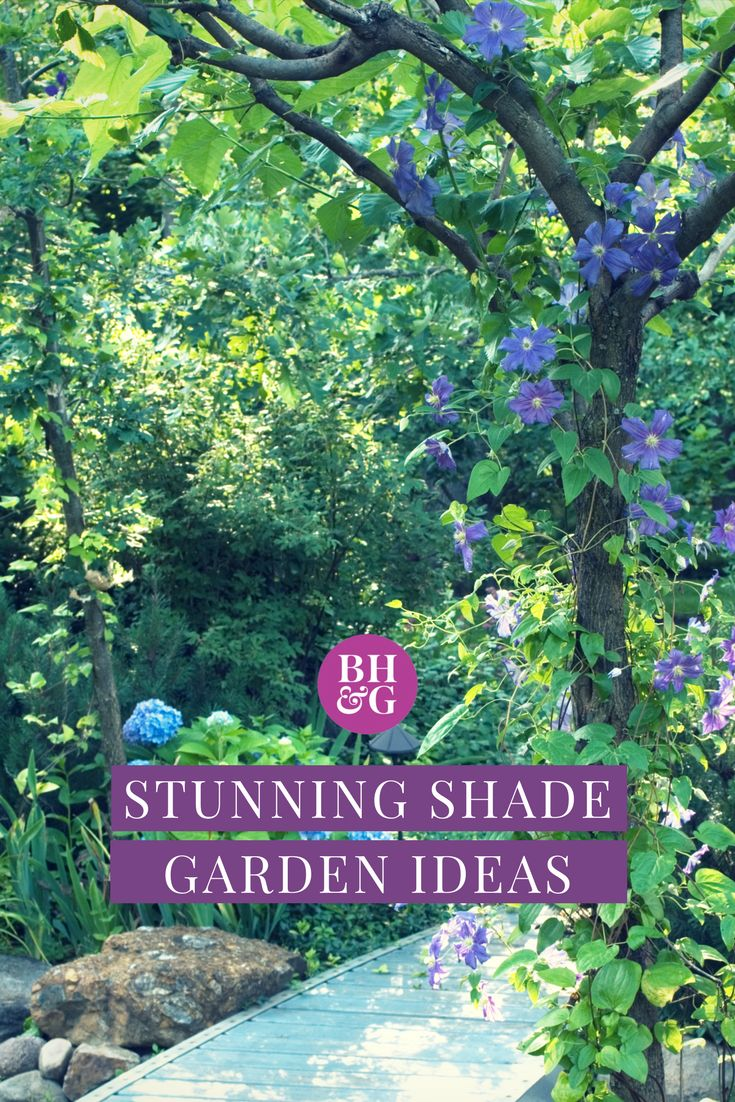 Creating a shade garden design for your yard has never been easier! We've rounded up the best design tips, ideas, and inspiration for a shady yard, so you don't have to worry about coming up with the perfect layout alone. #shadegarden #gardening #landscaping