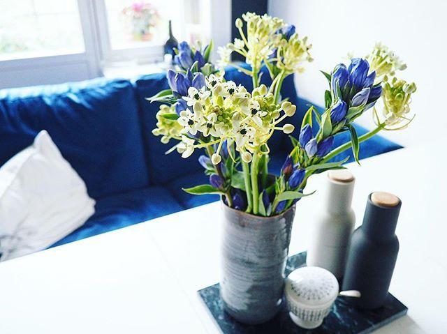 Blau blau blau sind alle meine Farben... Happy Friday!️  #bloom #blooms #bloomydays #blue #bluephase #color #couch #decor #decoration #details #dotd #flower #flowers #flowerstagram #friday #goodmorning #home #instadaily #instagood #interieur #interior #interiordecor #interiordesign #kitchen #Küche #menu #sofa #tgif #velvet