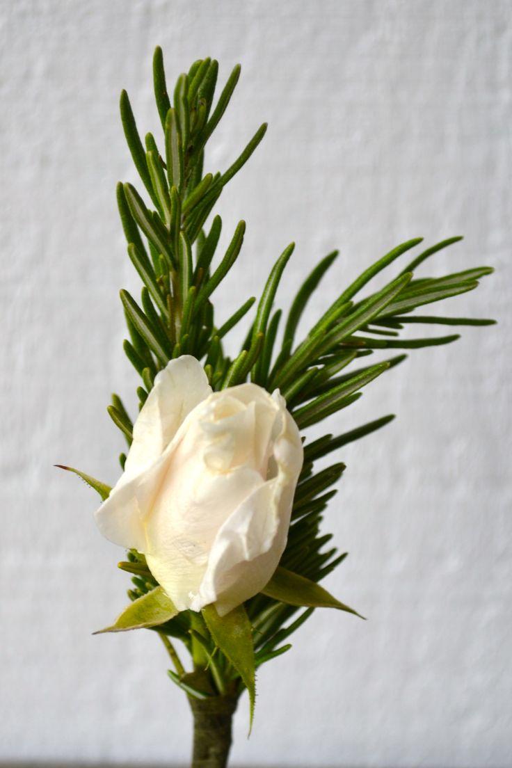 Girasole Sonoma- rosemary and white iceberg rose.  Boutonniere.