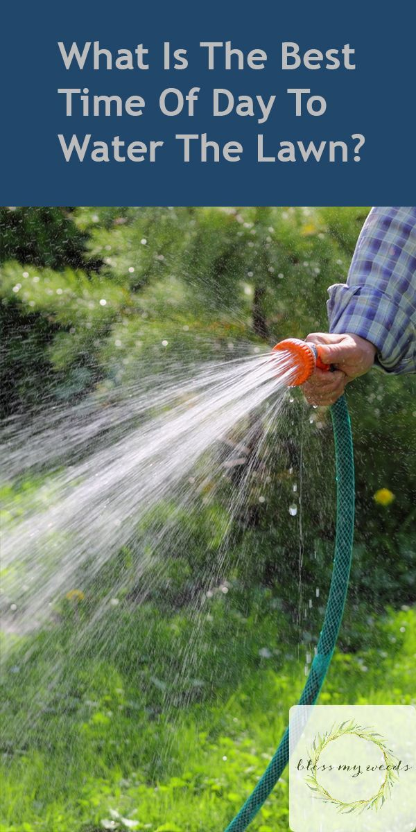 24+ Whats the best time to water plants information