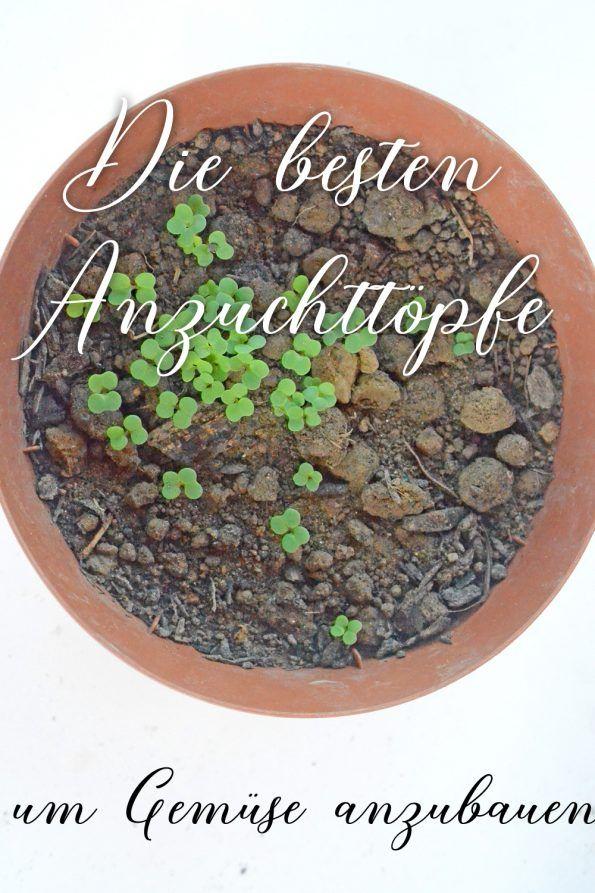 Alternative Anzuchttopfe Die Du Daheim Hast Mit Bildern Gemuse Anbauen Pflanzen Gartenarbeit