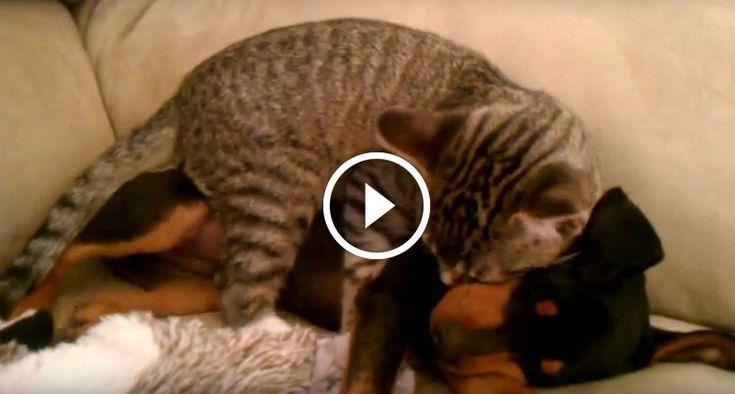 Ez a cica egész nap a barátját várta, hogy haza érjen az állatorvostól- Nézd milyen aranyos dolgot tesz, mikor újra találkoznak!