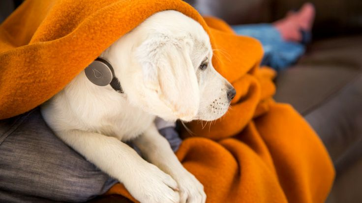 New startup, Whistle, is bringing the big-data health revolution to pets as it aims to help pet owners and vets spot early signs that a dog is sick.