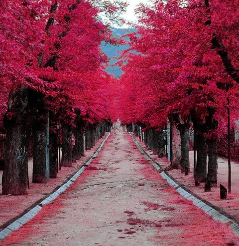#photography #trees #red