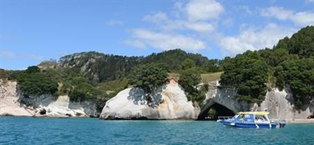Glass Bottom Boat | Coromandel Adventures | Coromandel Town Tours & Activities | Coromandel Peninsula.
