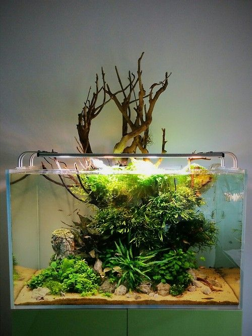 Nano and More Aquascaping, Cologne, Germany. https://www.facebook.com/aquananoandmore