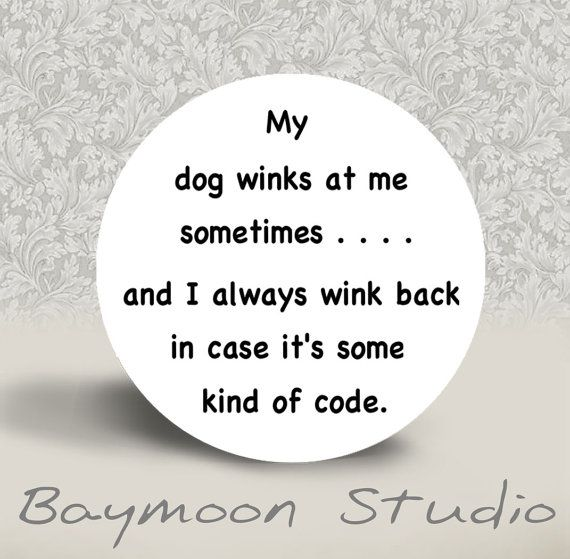 My Dog Winks at Me Sometimes  PINBACK BUTTON or by BAYMOONSTUDIO, $2.00