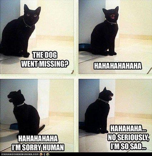 The dog went missing? hahahahahaha. hahahahhaha I'm sorry ...