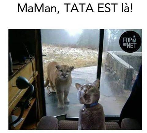 Lol la tête du cat !!!