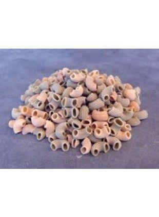 Tricolore macaroni Speltpasta (500 gram)