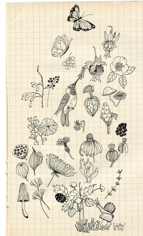 botanique, Cécile Hudrisier