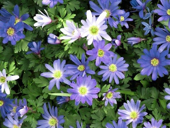 Garden Flowers Names