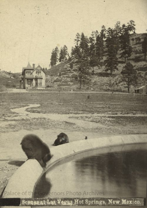 pogphotoarchives:   Bears drinking from fountain, Las Vegas Hot Springs, New Mexico  Bears drinking from fountain, Las Vegas Hot Springs, New Mexico  Creator: Continental Stereoscopic Company Date: 1878 - 1898? Negative Number 014734