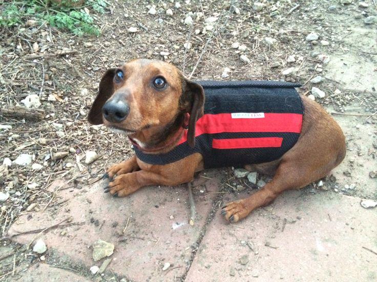 Pin on WiggleLess Dog Back Brace Family and Friends