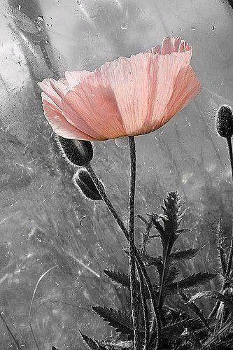 Beautiful splash of a peach colored flower