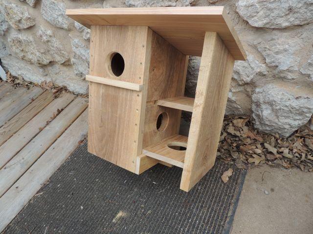 Squirrel home designs