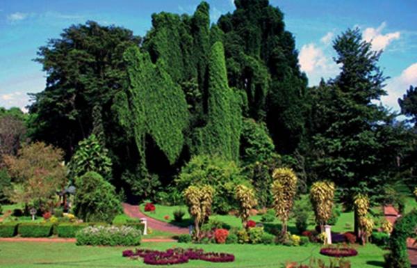 peradeniya tropical garden