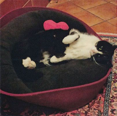ARENA Katzenkorb aus 100% Wollfilz, ARENA cat basket out of 100% wool felt, ARENA cesto gatto di feltro lana