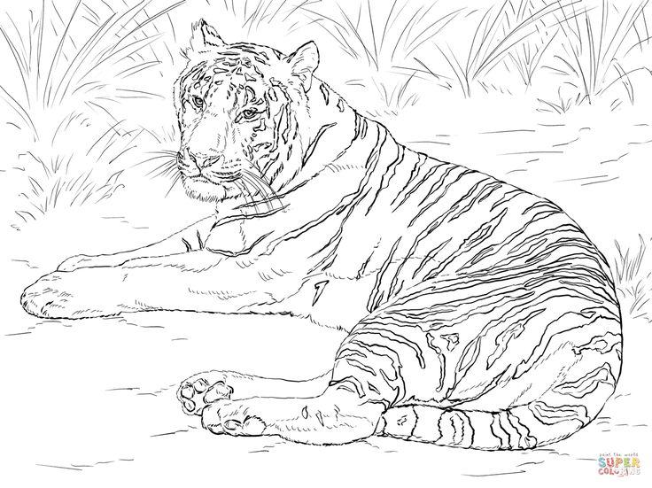 Kleurplaat Tijger Printen Tiger Coloring Pages Google Search Mikayla Siberian
