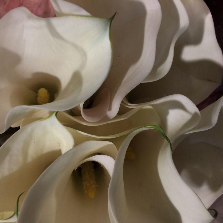 Cream arum lillies