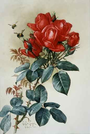 """""""Papa Gontier Roses""""   c.1904 - Watercolor By Paul de Longpre"""