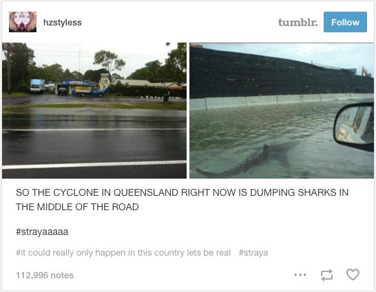 This not-so-friendly reminder. | 29 Times Tumblr Just Couldn't Take Australian Animals Seriously. I never knew sharknado actually was a thing