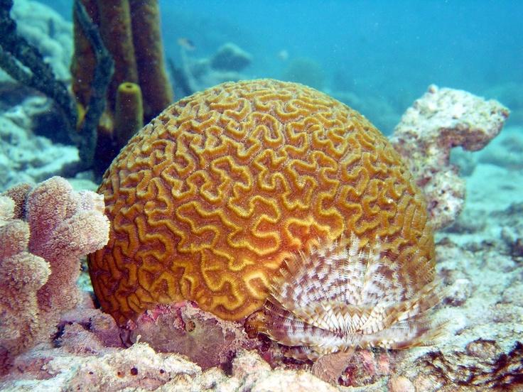 Mejores 9 imágenes de Ras Abu Soma en Pinterest | Mar roja, Coral y ...