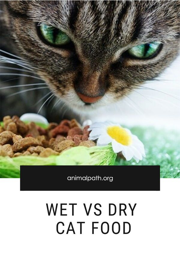 Pin On Cat Food Nutrition