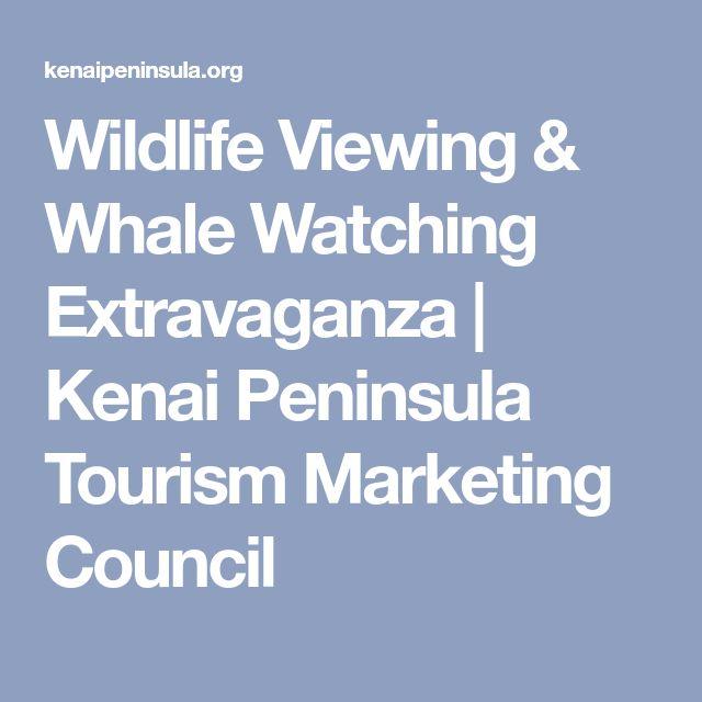 Wildlife Viewing & Whale Watching Extravaganza | Kenai Peninsula Tourism Marketing Council