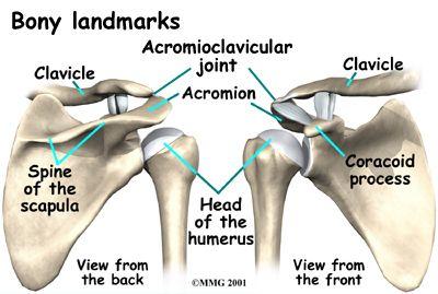 Osteoarthritis of the Acromioclavicular Joint | Orthopedics ...