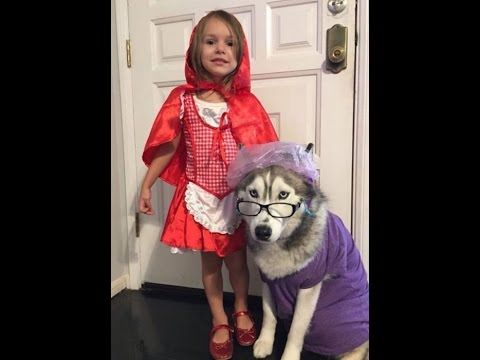 Halloween los mejores disfraces para ti y tu mascota¡¡