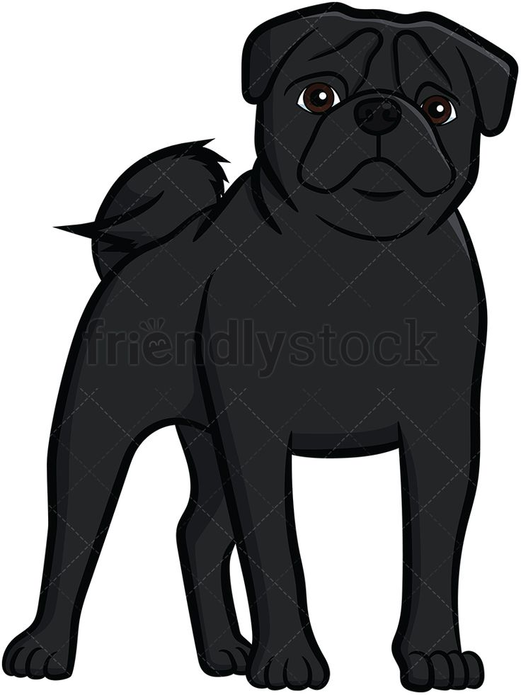 Black Pug Standing: Royalty-free stock vector illustration of a black pug dog with a curly tail and wrinkly face, standing on all fours and staring. #friendlystock #clipart #cartoon #vector #stockimage #art #pug #cute #mastiff #chinese #dutch #vigilant #black