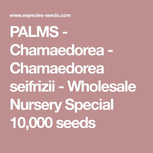 PALMS - Chamaedorea - Chamaedorea seifrizii - Wholesale Nursery Special 10,000 seeds