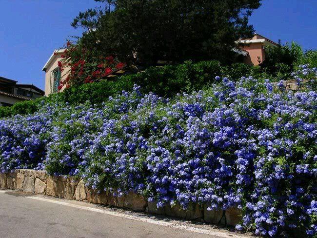 Mejores 34 im genes de arbustos para jardin en pinterest for Arbustos decorativos jardin