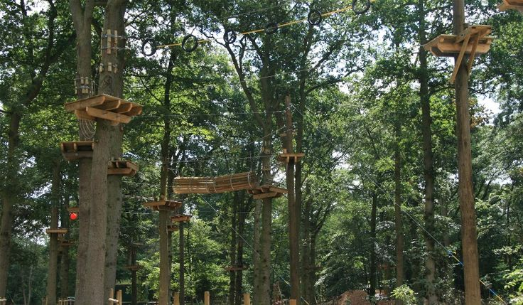ropes courses  High Ropes in Trees  Rope Course