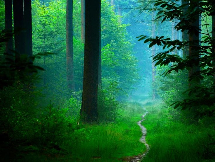 Paranormal Emotions:  Dark Forest