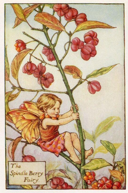 Spindel Berry Flower Fairy Vintage Print, c.1927 Cicely Mary Barker-boekillustratie plaat