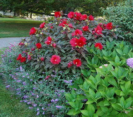 840 besten Plants - Sun Bilder auf Pinterest | Gartenpflanzen ...