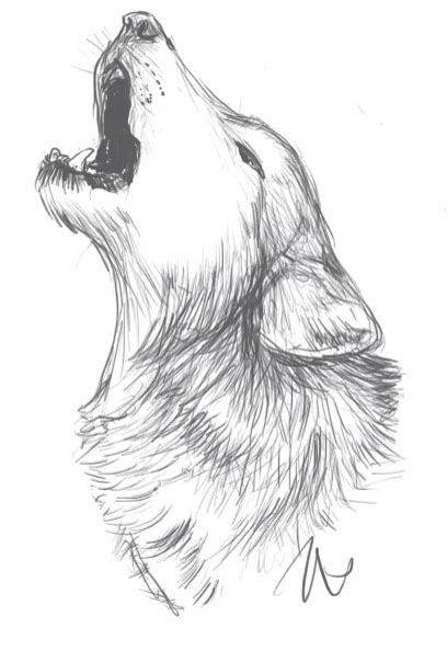 The 25 best Lobo dibujo ideas on Pinterest  Dibujos de lobos
