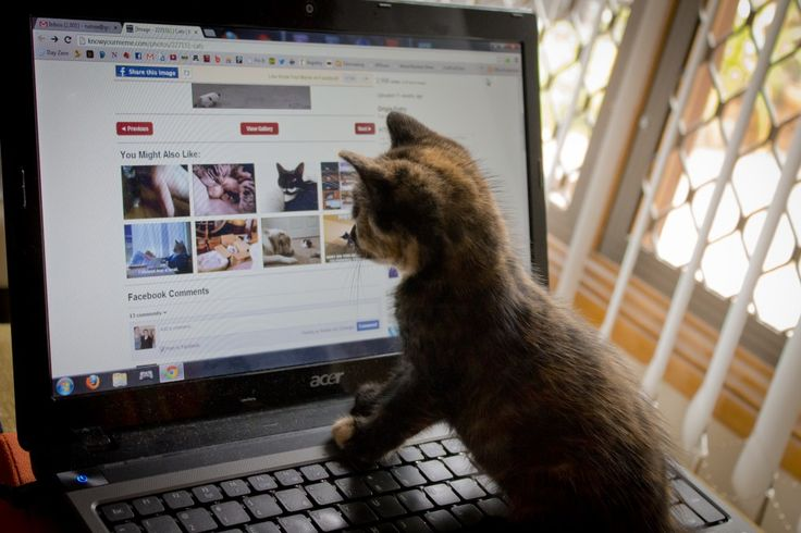 30 best writing cats images on pinterest funny animal funny fore i fazoni dio 96 spiritdancerdesigns Choice Image
