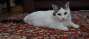 Rescue Cat with Feline Asthma Finds New Home check this fantastic photo from Katzenworld