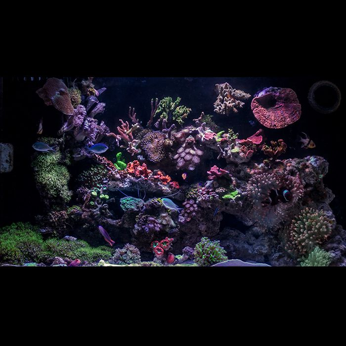216 Best Reef Aquariums Images On Pinterest