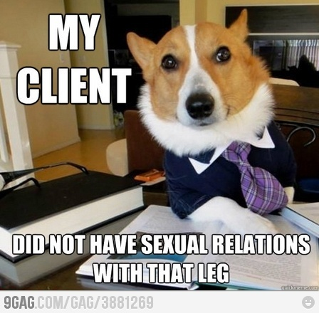 Selecting a criminal attorney is not a joking matter.: Funny Dogs, Lawyer Dogs, Dogs Memes, Choo The Rights, Lawyer Humor, Corgi, Friday Fun, Dogs Humor, Legally Humor
