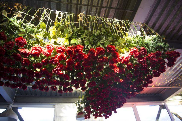 Rosas colgadas, Muelle Barón.