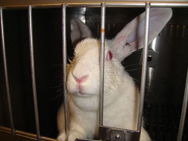 Please urge Kikkoman to modernize its research program and to stop killing animals.