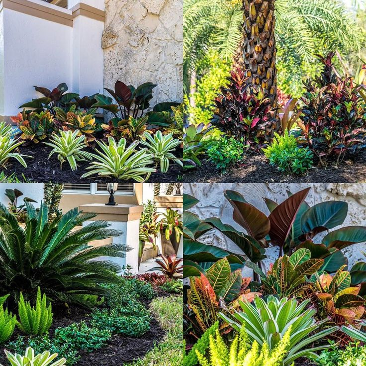 Calling all realtors... call us for a unique landscaping special for your clients.. #luxuryhomes #fortmyersrealtor #bonitasprings #capecoral #naplesrealestate #naplesrealtor #naplesrealtors #fortmyersrealestate #estero #esterorealestate #capecoralrealestate #capecoralrealtor #capecoralrealtorswfl #realtorswfl #landscapingswfl #sagopalm #croton #foxtailfern #hgtv #curbappeal #bloomwater #bloomwaterllc #twosellingsisters