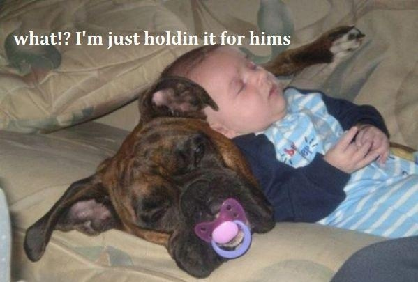 Not all  pit bulls are bullies some are big babies!------ i agree, our pit used to steal  pacifiers too!  LOL!!  ---however, this looks like a boxer to me.