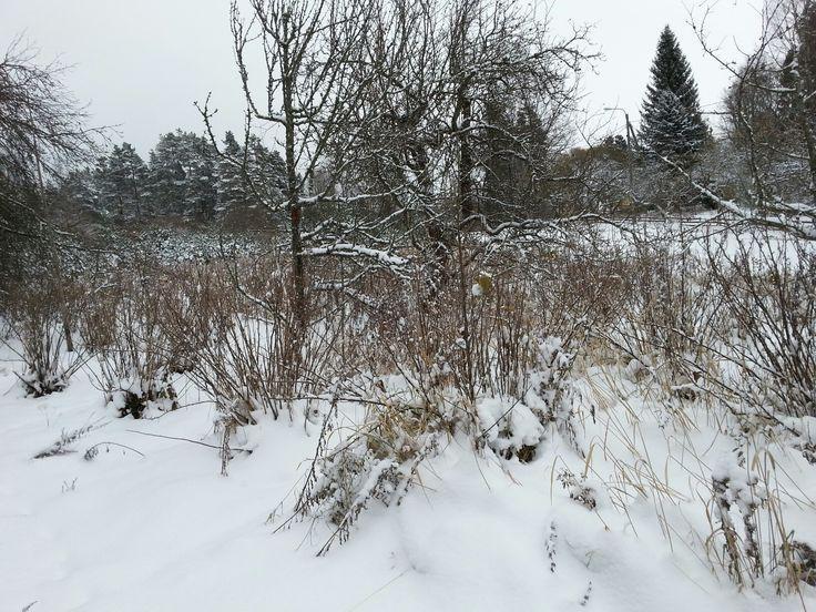 November 10  ,  2016 . Aikainen talvi Nurmijärvellä  . NURMIJÄRVI  . FINLAND  .