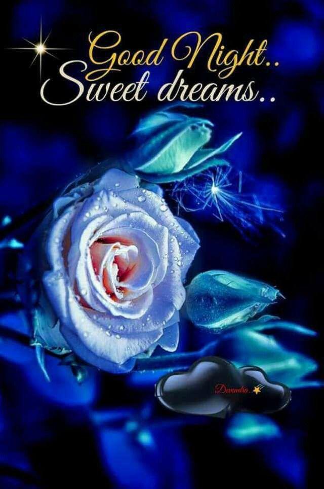 Good Night Daizo