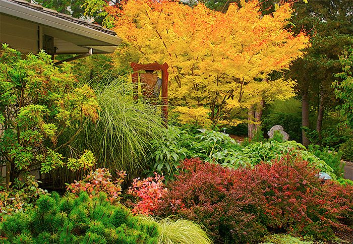 Zone 3 ornamental flowering trees ornamental trees for Flowering ornamental trees zone 5
